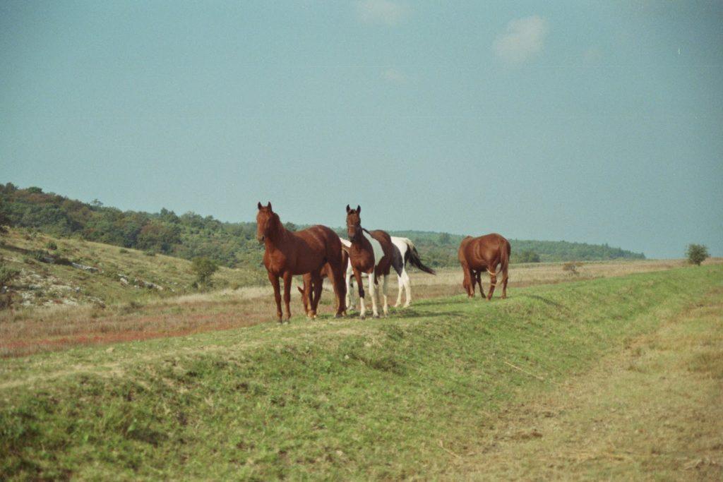Pferde Slowenien Secovlje Adria